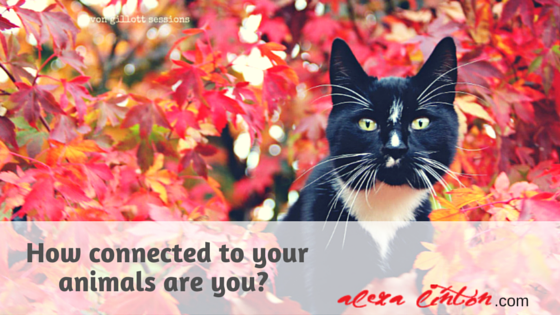 How Connected to your Animals are you?