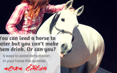 You can lead a horse to water but you can't make them drink. Or can you?