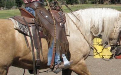 The Californio Bridle Horse: The Art of Horsemanship by Stefanie Travers
