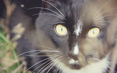 What cats can teach us about leading a wickedly awesome life.