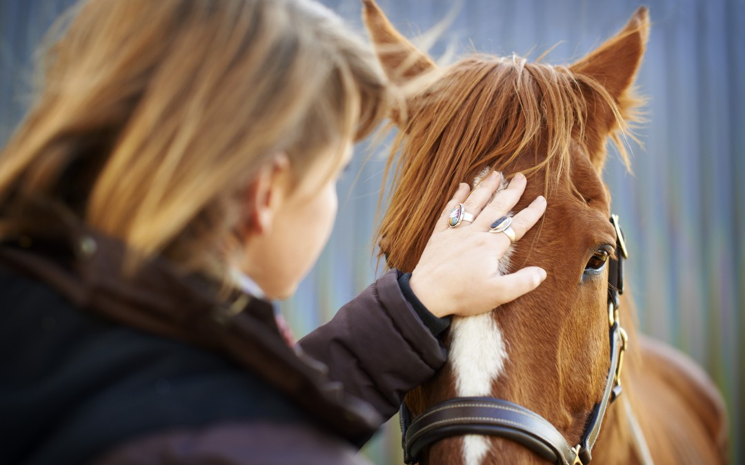 10 awesome reasons to learn Animal Communication (and they're not what you think!)