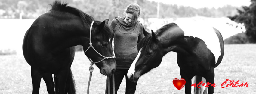 A Humorous and Helpful Road Map to the Highly Sensitive Horse