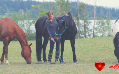 What Element is Your Horse? A Look at your Horse's Health with the Help of the TCM 5-Element Theory.
