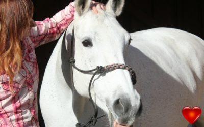 My horse has chakras? And how to balance these key energy centres that you just found out about….