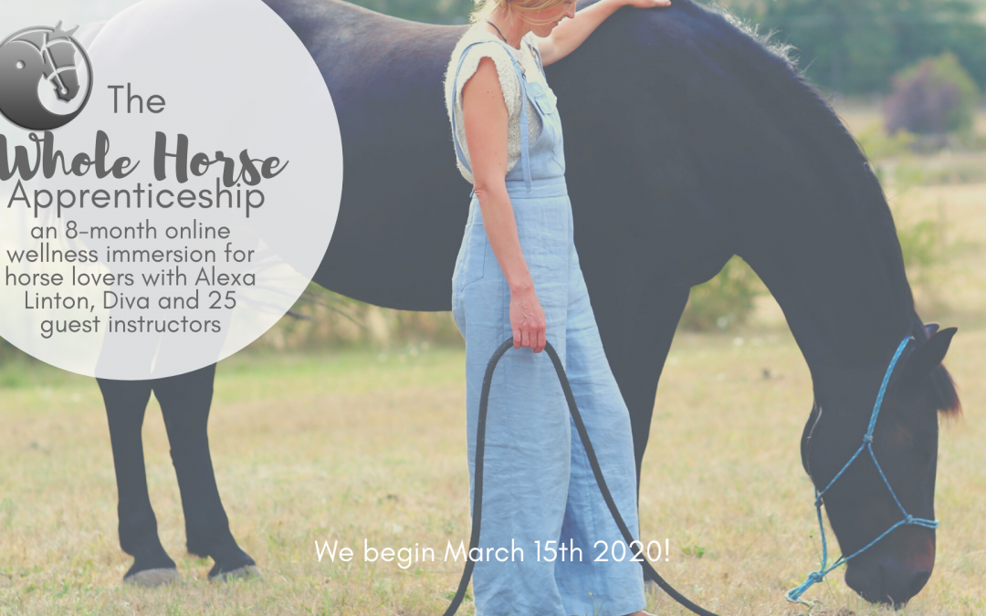 The Whole Horse Apprenticeship 2020